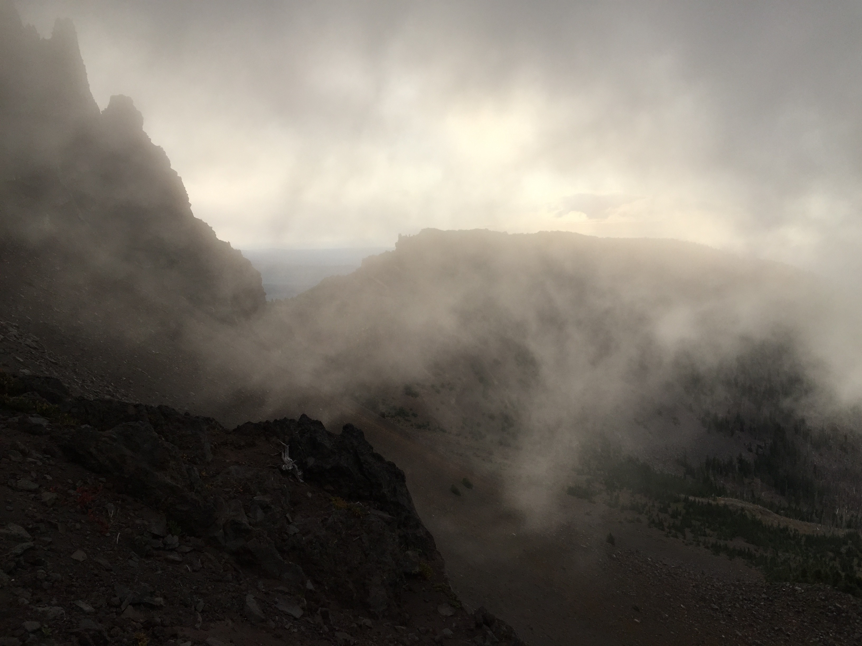 Three fingered jack in fog